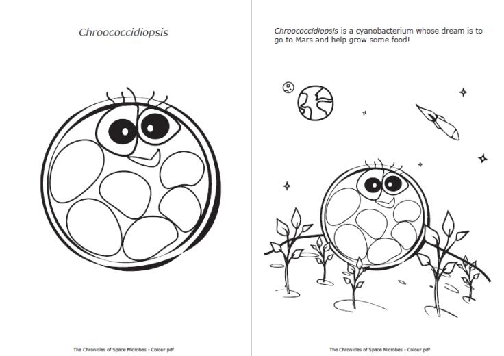 chroococcidiopsis