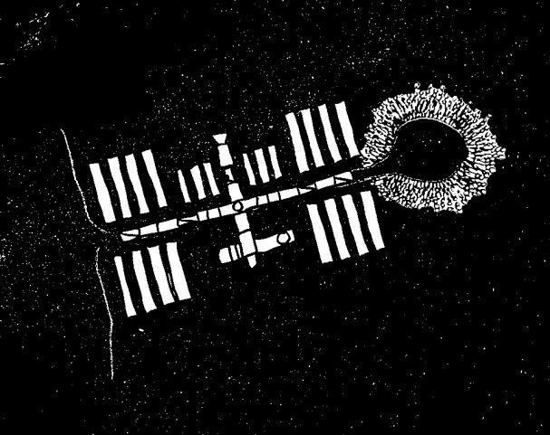 ISS_aspergillus_black